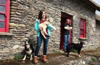 Sheepdogs Kerry